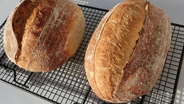 Panes con escaldado de Tritordeum